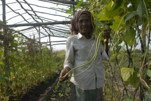 Cambodia Indigenous Restoration